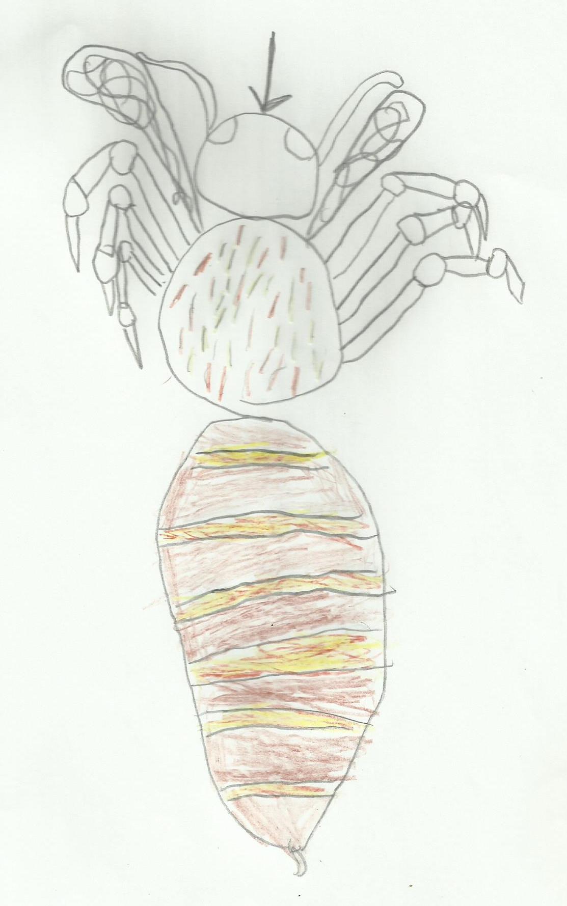 abeille 6