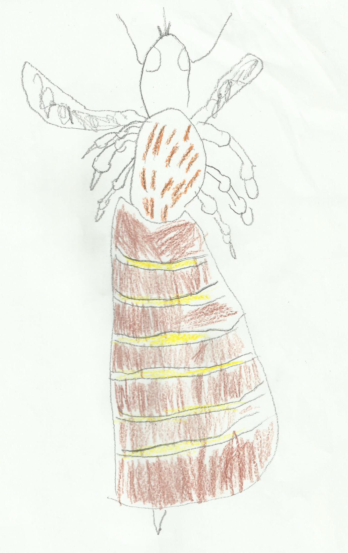 abeille 7